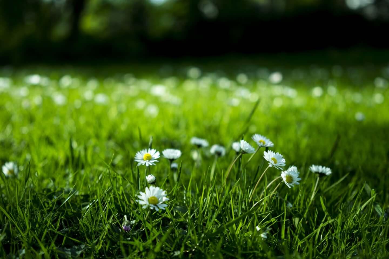 3 bí quyết diệt cỏ dại